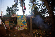 Every motning this man climbs into his coconut trees to collect coconuts for his Juicebar.<br /> Arambol beach, Goa, India 2013<br /> ©Ingetje Tadros