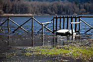Monticchio Laghi (PZ) 12.03.2011 - Il degrado dei laghi di Monticchio (PZ). Una delle spiaggette del lago grande invasa dall'acqua e con rifiuti che vi galleggiano.
