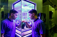 Sam Cho examines a plant in one of the growth chambers in the newly renovated Phytotron facility.