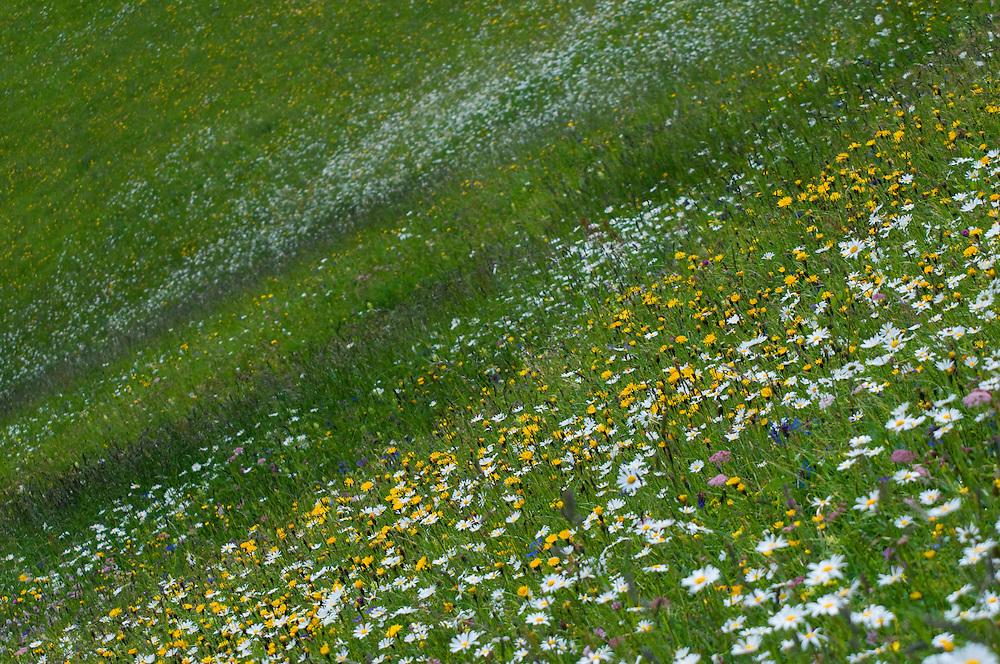 Wild Flower Meadows, Augstenberg, Liechtenstein