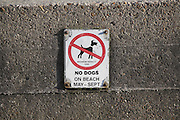 No dogs on beach sign on concrete wall