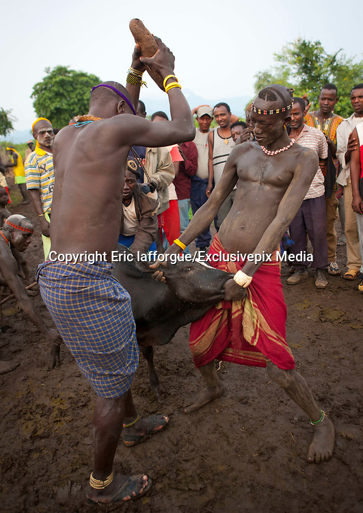 BODI TRIBE FAT MEN<br /> (very) big is beautiful<br /> <br /> Every  year,  takes  place  in the deep south of Ethiopia, in  the <br /> remote  area of Omo valley, the celebration of  the  Bodi  tribe  new <br /> year: the Kael.For  6  months  the  men  from  the tribe will   feed   themselves with only fresh  milk  and  blood  from <br /> the cows. They will not  be allowed to  have sex and to go out of their  little hut.  Everybody will take care of  them, the  girls  bringing  milk  every morning in pots or bamboos. The  winner  is  the  bigger.  He  just <br /> wins fame, nothing special. This  area does not  welcome tourists and has kept his traditions<br /> <br /> Photo shows: The ceremony ends with the sacrifice of a cow. They kill it with a huge sacred stone. <br /> ©Eric lafforgue/Exclusivepix Media