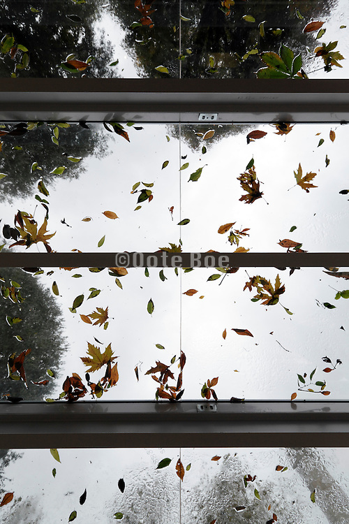 leaves on glass roof