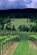 Husch Vineyards, near Philo, Anderson Valley, Mendocino County, California