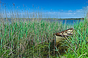 Boat among the reeds at Lough Muckanagh, County Clare, West of Ireland