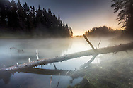 Misty lake at dawn