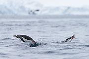 It is the lock ness monster or a loong pinguin, or maybe two | Er det lockness uhyret, en forvokst pingvin, eller er det to.