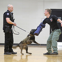 Tupelo Police K-9 officer Jax, a Belgian Malinois, held by his handler, Tupelo officer Justin Tutor, during an excerise where Jax simulates catching officer Ken Soderstrom.