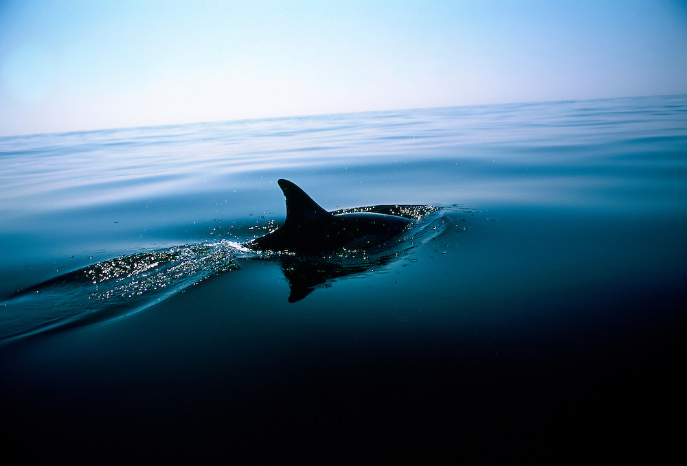 Dorsal fin of a single dolphin swimming in the Mediterranean Sea off the coast of southern Spain