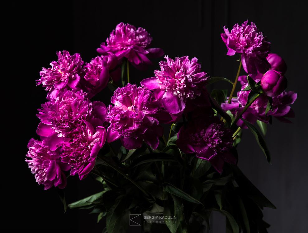 Цветы, снятые со студийным светом.