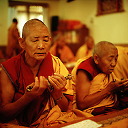 Morning puja (buddhist ritual) - Geden Choeling nunnery, Dharamsala, India, 2009