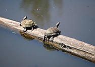 Turtles looking up