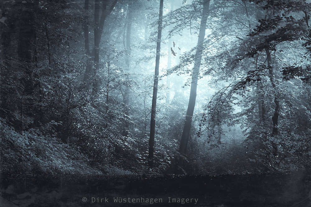 Hazy forest in morning light<br /> Prints: https://society6.com/product/blue-mystic-forest-kmh_print#s6-4687516p4a1v45<br /> <br /> Prints2: http://www.redbubble.com/people/dyrkwyst/works/22408398-blue-mystic-forest?ref=recent-owner