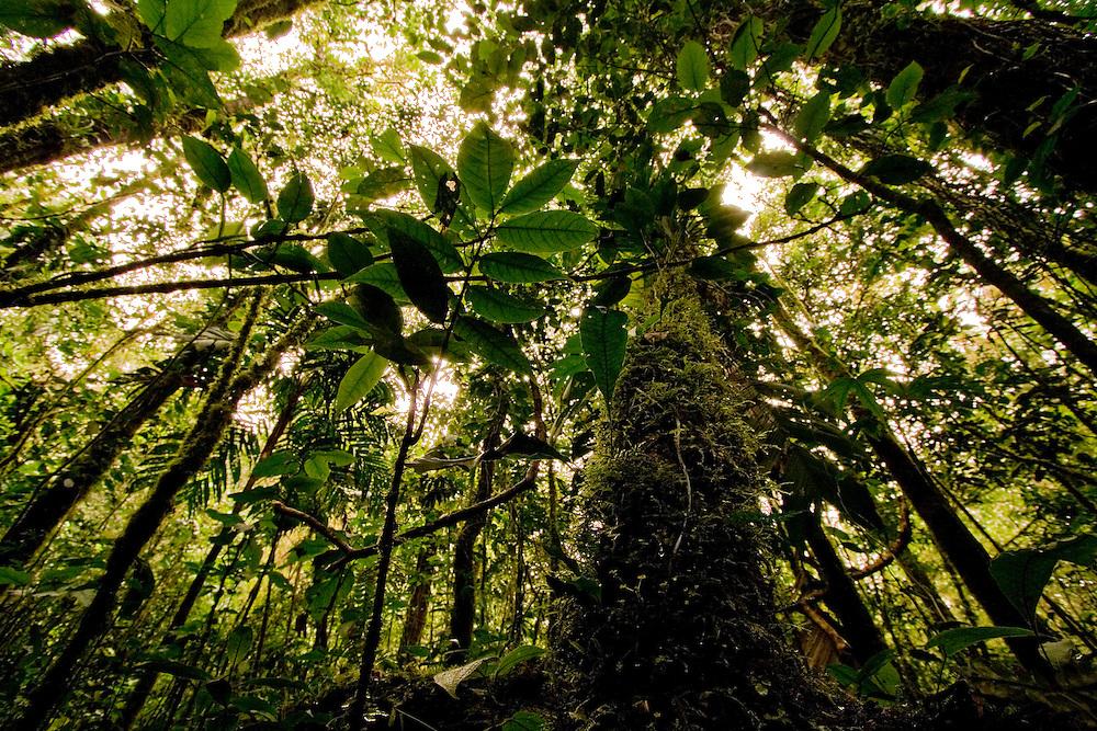 Cloudforest of Sierra Nevada de Santa Marta, Colombia