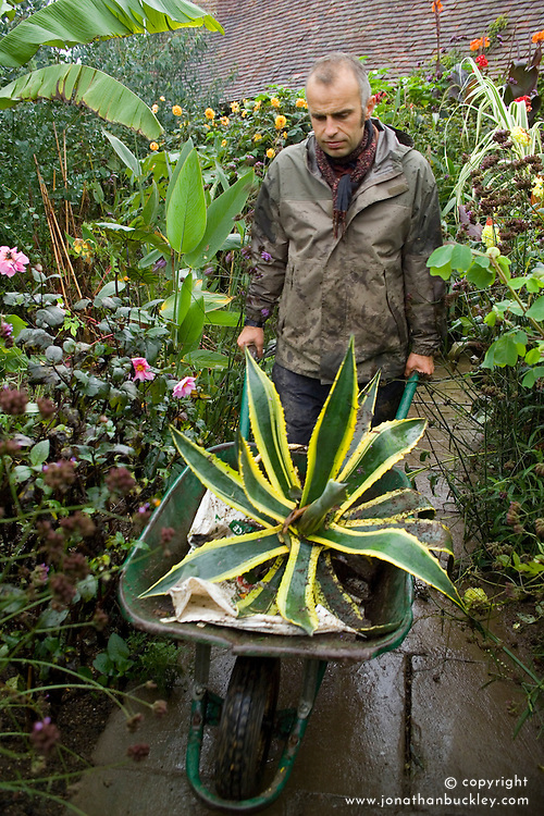 Fergus Garret with Agave americana 'Variegata' lifted and ready for overwintering