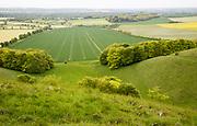Chalk escarpment scarp slope, Pewsey Downs chalk grassland, Vale of Pewsey, Wiltshire, England, UK looking south to Woodborough