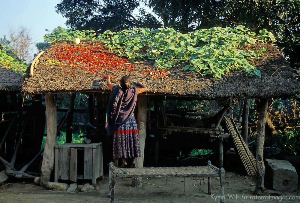 Asia, Nepal, Bardia. Tharu woman sorts peppers and vegetables on roof.