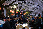 People party under the cherry blossom at Ueno Park in Tokyo, Japan on 31 March, 2010.