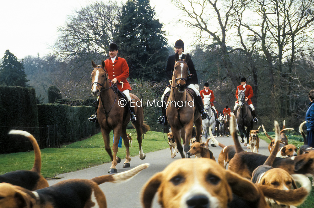 Belvoir Foxhounds, Belvoir Castle, Leicestershire, England, UK, 11/03/1992.