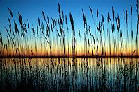 Sunset, Eastern Neck National Wildlife Refuge, Maryland