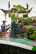 "10 JUNE 2014 - YANGON, MYANMAR:   A crewman on a banana boat holds up a stalk of bananas. The ""banana jetty"" is on the Yangon River north of central Yangon on Strand Road. Bananas, coconuts and other fruit are brought in here from upcountry, sold and reshipped to other parts of Myanmar (Burma). All of the labor here is done by hand. Porters carry the produce to the jetty and porters load the boats before they steam upriver.   PHOTO BY JACK KURTZ"