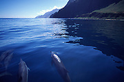 Dolphins, Napali Coast, Kauai, Hawaii<br />