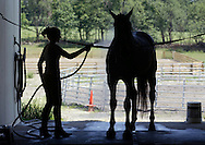 Tara Corr hoses down Tyler after training at Old Field Farm in Goshen on July 31, 2007.
