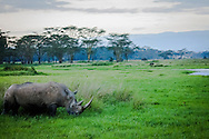 Black Rhinoceros – Lake Nakuru National Park, Kenya, Africa: The black rhinoceros had been pushed to the brink of extinction by illegal poaching for their horn, and to a lesser extent by loss of habitat. A major market for rhino horn has historically been in the Arab nations to make ornately carved handles for ceremonial daggers called jambiyas.