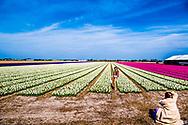 LISSE - Bezoekers maken foto's van kleurrijke tulpen in de bloeiende bollenvelden rond de Keukenhof. ANP ROBIN UTRECHT