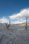 USA, Wyoming, Yellowstone National Park, Mammoth Hot Springs