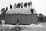 Cotton is packed into a container that will be picked up by a truck to taken to a Sofitex processing factory.<br /> Pad&eacute;ma, Burkina Faso. 15/12/2003.<br /> Photo &copy; J.B. Russell