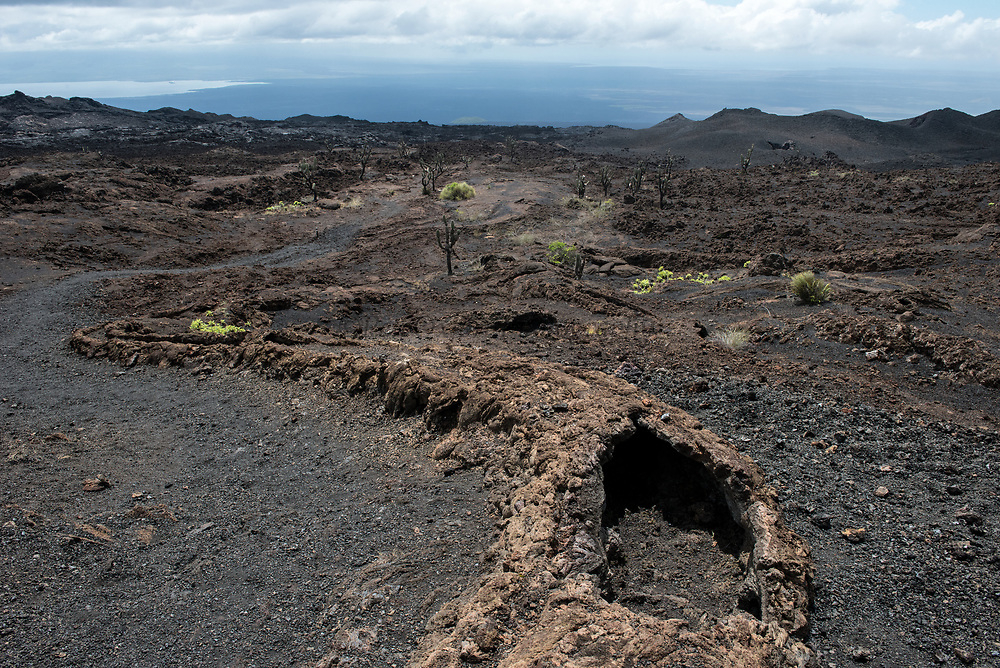 Lava tube<br /> Volcan Chico<br /> Sierra Negra Volcano<br /> Isabela Island, <br /> GALAPAGOS,  Ecuador, South America