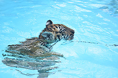 8-17-16 1:30 Swim