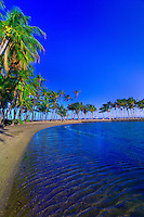 Palm trees, Anaehoomalu Bay, Waikoloa Beach Marriott Resort & Spa, Waikola, The Big Island of Hawaii, Hawaii, USA