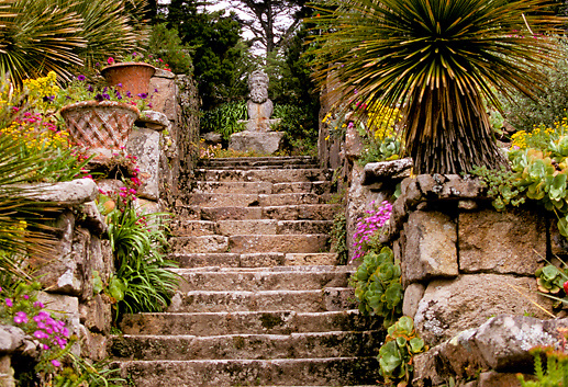Garden on Scilly Islands, England