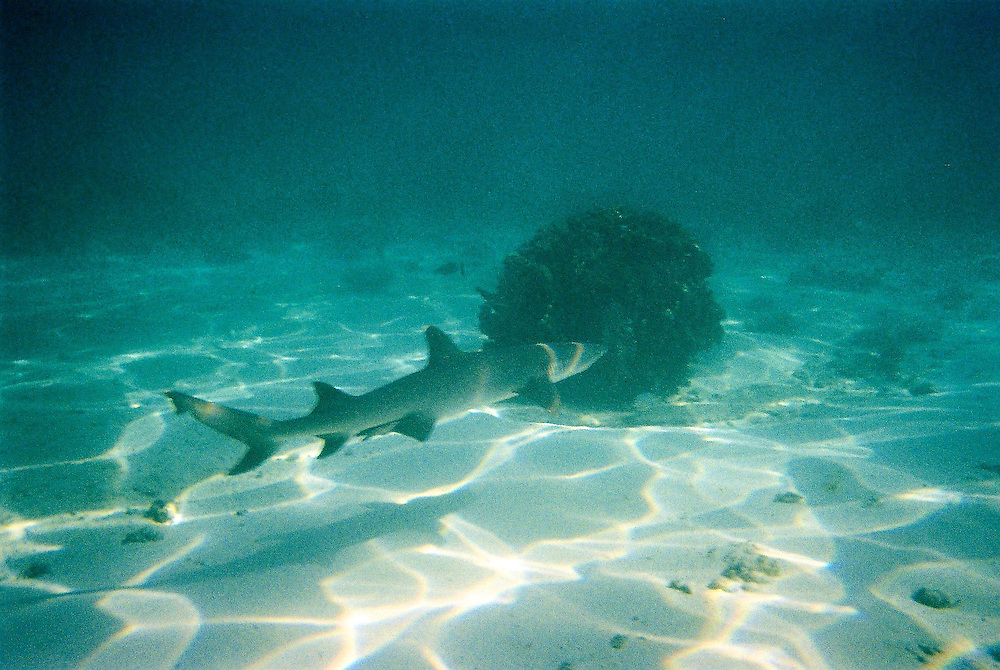 Disposable Underwater Camera 009