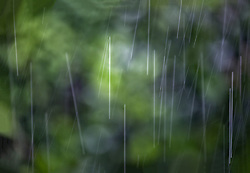 The Effect of Shutter Speed on Falling Rain Set 3-#1