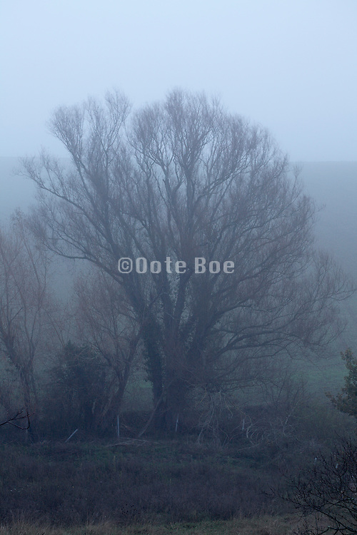 tree with early morning fog