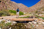 Hiker in Borrego Palm Canyon, Anza-Borrego Desert State Park, California USA