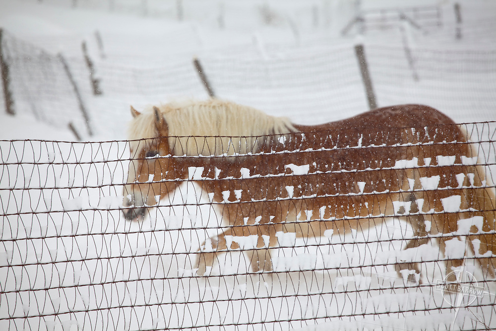 Horse in snow storm.