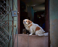 Gone to the Dogs. Morning Walkabout in Old Havana. Image taken with a Leica T camera and 23 mm f/2 camera.