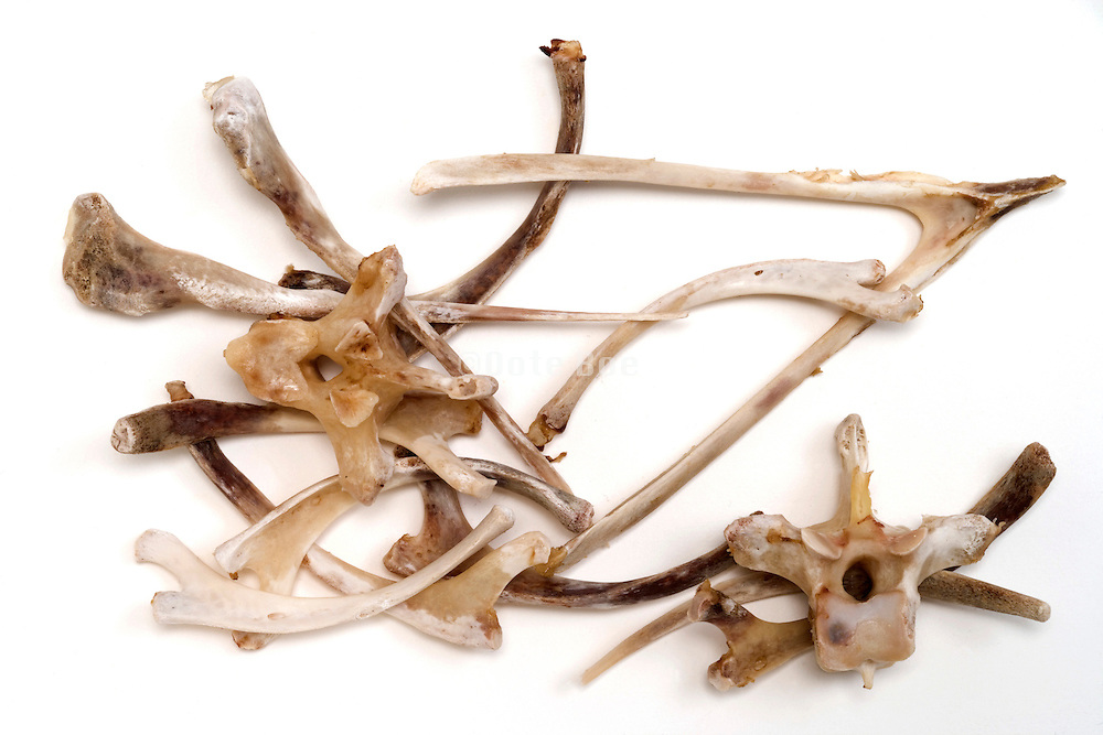 wishbone and other various small bones of a Turkey