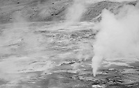 Steam being released at Norris Geyser Basin in Yellowstone National Park, Wyoming