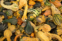 Gourds for sale at a market in Ontario, Canada.