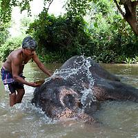 Washing Raj. Elephant sanctuary in Sri Lanka