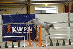108 - Grace Kellygrafin<br /> Vrijspringen 3 jarige Merries<br /> KWPN Paardendagen - Ermelo 2014<br /> © Dirk Caremans