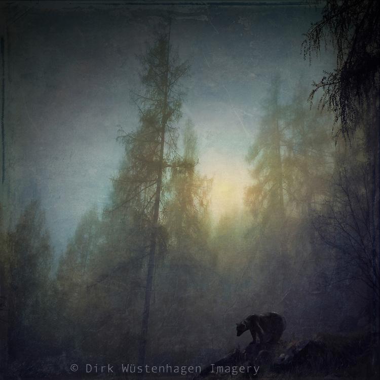 Photomanipulation based on my own shots. Bear prowling through a nightly foggy forest