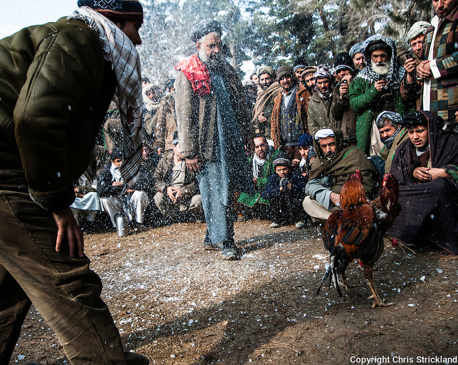 Pul-i-Khumri, Baghlan, Afghanistan. 12th February 2010. Men gather after Friday prayers to take part in cock fighting, known in Farsi as 'Murgh Jangi'. The sport takes place in the winter months so any wounds inflicted can heal quicker. Thousands of dollars can exchange hands in gambling in some fights.
