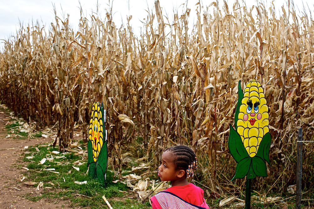 """Calvin Rodwell Elementary School Pre-kindergarten student Jordan Edwards, 4, left, explores the corn maze at Summers Farm in Frederick, MD on Oct. 24, 2012. The visit to the farm was part of a """"Common Core"""" reading and learning unit for their class, which aims to follow up non-fiction reading with learning in the field. The day prior the children read a book about going to a farm."""