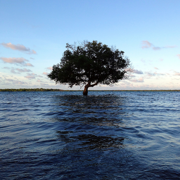A singular tree sits along the coastline between Lamu and Shela in northern Kenya. As the tide comes in daily, the trunk is submerged.